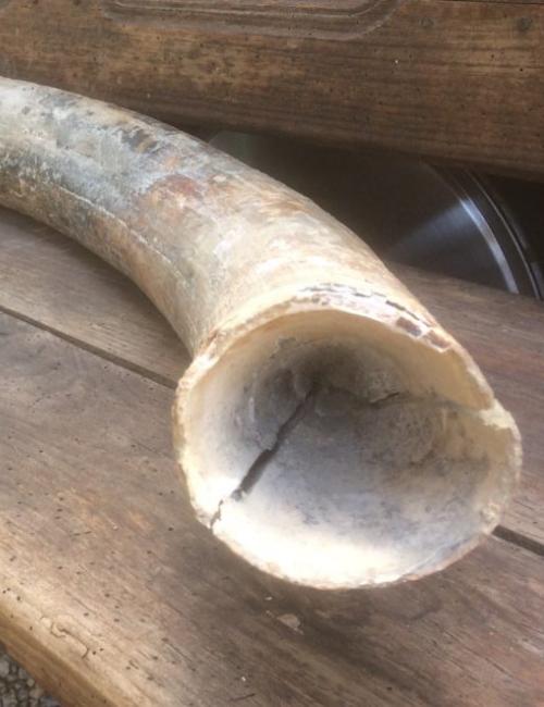 defense de mammouth